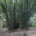 In the Osun-Osogbo Sacred Grove