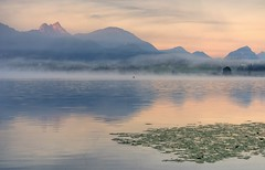 *Morgenzauber am Hopfensee* (Albert Wirtz @ Landscape and Nature Photography) Tags: albertwirtz hopfensee see lake water wasser landscape paesaggi paysage paisaje campo campagne campagna landschaft berge mountains alpen alps bayern bavaria hopfenamsee füssen nebel fog mist brume bruma brouillard nebbia laniebla twilight goldenhour goldenestunde morgenstimmung silence stille angler angeln boot boat sunrise sonnenaufgang deutschland allemagne germany reflection spiegelung nikon d810 fineart fineartphotography landscapefineart natur nature natura travel reisen ostallgäu schwangau morgenzauber morningmagic magical bebele