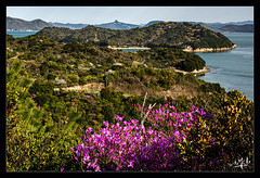 8ème jour / 8th day - L'île de Naoshima / Naoshima island (christian_lemale) Tags: naoshima island île nature landscape mer sea côte coast japon japan 直島 日本