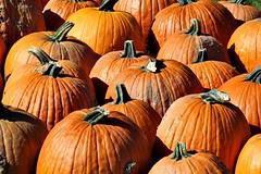 PUMPKINS (MIKECNY) Tags: pumpkins fall orange gourd ellmsfamilyfarm ballstonspa