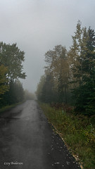Pincushion Mountain (Lzzy Anderson) Tags: pincushionmountain gunflinttrail grandmarais 2019 october autumn fog woods forest changingleaves fall rain clouds overcast stormclouds road street