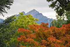 Herbst im Botanischen Garten Innsbruck (Ernst_P.) Tags: 135mm a99ii austria aut botanischergarten f20 innsbruck österreich pflanze samyang tirol walimex herbst otoño autumn fall