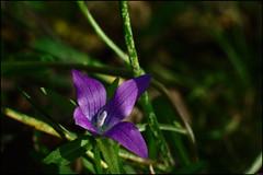 Fleur - 281/365