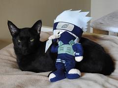 Kakashi and Kakashi (annette.allor) Tags: kakashi naruto cat plush doll plusie ninja narutomanga kakashihatake anime
