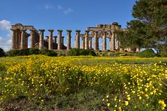 Selinunte (Ignace Fermont) Tags: italië sicilië selinunte sicilia sicily