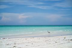 Playa Pilar, Cayo Guillermo