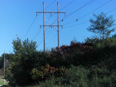 Hillside wires (novice09) Tags: telegraphtuesday htt poles wires sumac