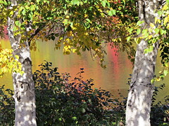 Framing the colours of Fall (clickclique) Tags: fall colours reflections reflection leaves trees white green yellow pink orange red beautiful frame framed pond lake thesunshinegroup sunrays5