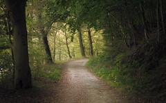 Canopy (Netsrak) Tags: eifel eu europa europe path way weg wanderweg tree trees baum bäume