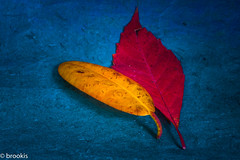 Seasons are changing (brookis-photography) Tags: paper blue yellow red leaf leaves autumn season fall