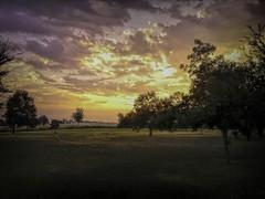 Elm Grove Sunrise (clarkcg photography) Tags: treespecan persimmon elm sunrise morning smartphone htc samsung