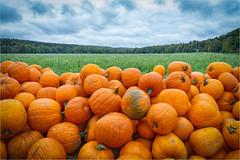 Herbst (Janos Kertesz) Tags: autumn orange harvest halloween pumpkin vegetable season fall seasonal october decoration background food crop fruit