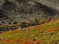 Red patches (dration) Tags: sweden lapland landscape