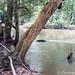 In the Osun-Osogbo Sacred Grove -  shrine at the river