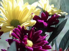 Morning Sunshine on Fresh Flowers (novice09) Tags: flowers sooc
