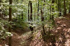 Through the forest: landscapes at ƒ/1.4 (elkarrde) Tags: nature landscape forest trees green autumn earlyautumn bokeh shallowdepthoffield dof shallowdof croatia stubica gornjastubica burjak burjakforest 2019 october october2019 autumn2019 foliage hills hill digitalphotography mediumdigital canon eos ef canoneos 5d 5dmk2 canoneos5dmarkii canonef50mm114usm canonef50mmf14usm 50mm 5014 ef50 ef5014 14 wideopen camera:format=135 fullframe camera:brand=canon camera:model=eos5dmarkii camera:mount=ef autofocus lens:format=135 lens:brand=canon lens:mount=ef lens:model=ef50mm114usm lens:focallength=50mm lens:maxaperture=14 twop location:country=croatia