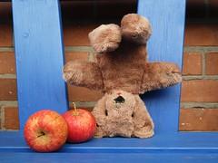 I can upside down too! (captain_j03) Tags: teddy teddybär bear upsidedown apfel apple sooc