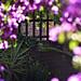 Flickr Lounge: Gates & Fences 3