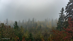 Pincushion Mountain (Lzzy Anderson) Tags: pincushionmountain gunflinttrail grandmarais 2019 october autumn fog woods forest changingleaves fall rain clouds overcast stormclouds