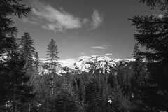 A window through the forest (Rico the noob) Tags: dof laax landscape 20mm mountains outdoor snow published trees bw blackandwhite tree schweiz forest monochrome clouds sky 2018 d850 20mmf18 nature switzerland