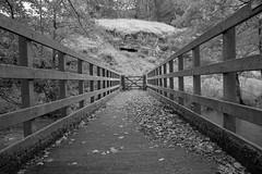 Frank-i-th-Rocks (Tony Tooth) Tags: nikon d7100 sigma 1750mm bridge footbridge wooden bw blackandwhite monochrome beresforddale derbyshire