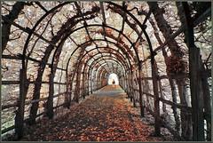 2019 10 05 Schloss Schwerin IR - 38 (Mister-Mastro) Tags: laubengang herbst hiver autumn blätter leafs feuille 720nm ir infrared