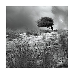 Reeds ! (Nick green2012) Tags: infrared tree reeds square minimal silence blackandwhite landscape