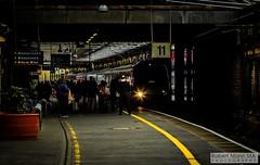 CreweRailStation2019.10.03-44 (Robert Mann MA Photography) Tags: train cheshire railway trains crewerailstation autumn station northern railways stations virgintrains 2019 pendolino class221 supervoyager class390 class319 class195 civity 3rdoctober2019 sprinter desiro class150 class350 londonnorthwesternrailway walesandborders transportforwales tfwrail