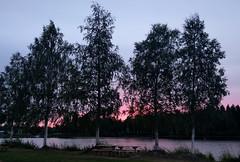 sunset (helena.e) Tags: helenae semester vacation holday rv älsa husbil motorhome campkajutan skellefteå sunset solnedgång träd tree björk birch water vatten