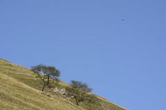 StrikeForce (Tony Tooth) Tags: nikon d7100 nikkor 55300mm bird falcon kestrel raptor wettonmill ectonhill staffs staffordshire staffordshiremoorlands