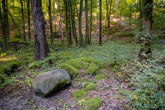Moss in the woods (BenedekM) Tags: nikon nikond3200 d3200 sigma sigma1750f28 rocks mountains woods trees forest forestlife nature hills hiking hungary hungarian hungarianforest hungarianwoods 2019autumn hungarianautumn moss lights shadows life