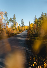 (thedrowsy) Tags: bokeh nature forest woods wood landscape road autumn color colours fall tones mood moody a7riii sony alpha sweden swe sverige jämtland norrland