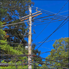 """""""Not now, I'm busy"""" (Timothy Valentine) Tags: large telegraphtuesday lines sky pole 2019 0919 trees norwell massachusetts unitedstatesofamerica"""