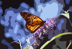 Stained Glass (kfocean01) Tags: manipulation nature insects butterfly paint blue orange colors flower flowers photomanipulation art