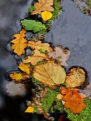 Leaf jam (robbbpage) Tags: