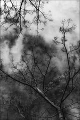 * (PattyK.) Tags: ioannina giannena epirus ipiros whereilive greece grecia griechenland ellada snapseed nikond3100 ιωάννινα γιάννενα ήπειροσ ελλάδα βαλκάνια ηπόλημου europe sky clouds trees monochrome blackandwhite ουρανόσ σύννεφα ioanninaisland