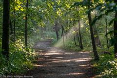 Scenics 235 (DL_Dietz) Tags: canoneos6d kensingtonmetropark landscape lightray livingstoncounty michigan nature naturephotography northamerica path scenics summer unitedstates woods