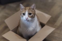 Joshi [ Minolta 58 1.2 ] (Andahir) Tags: joshi cat pet haustier cardboardbox rokkor minolta minolta58mm12 mcrokkorpg58mm12 fujixt3 fuji fujifilm xt3 mirrorless manuallens manualfocus home