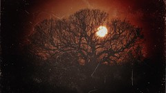 Danson Park Oak Tree Sunset (updownmo) Tags: tree oak danson park bexley night sunset uk nature life moment image photo picture frame timeless future present alone branches shapes scary horror movie winter wintertree orange