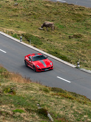 GTO vs Cow (Mattia Manzini Photography) Tags: ferrari 599 gto 599gto supercar supercars cars car carspotting carbon nikon d750 v12 automotive automobili auto automobile switzerland andermatt oberalppass soc supercarownerscircle alps nature cow red stripes