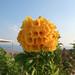 Cyprus   Kourion