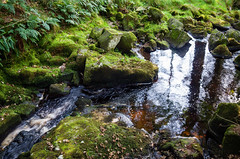 Reflection in Stream (kckelleher11) Tags: 2019 colour glencree ireland leica september reflected reflection stream tree wicklow xe