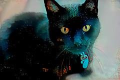 Spook Cat (Carol (vanhookc)) Tags: deepdreamgenerator blackcat digitalprocessing digitalart postprocessing