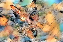 The Literary Cat (Carol (vanhookc)) Tags: deepdreamgenerator blackcat digitalprocessing digitalart postprocessing literarycat