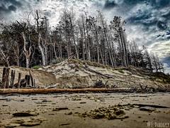 Baie d'Authie après les grandes marées d'équinoxe #cotedopale#baiedauthie #bercksurmer #landscape