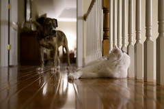 Chip and Buttercup (Garen M.) Tags: buttercup ella nikkor2470f28s nikonz6 cats dogs home