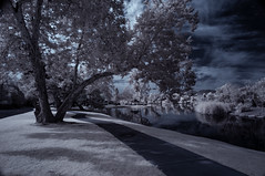 Reflecting On Clouds And Trees At Santee Lakes (Bill Gracey 25 Million Views) Tags: infrared infraredphotography convertedinfraredcamera ir santeelakes trees clouds reflections composition nature surreal sky santeelakesnumber5