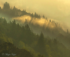 Sun Rays and trees (Angie Vogel Nature Photography) Tags: trees fog sunrays layers nature columbiarivergorge