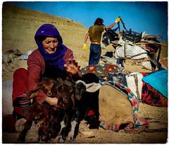 Kurdistan ❤️روژ باش کوردستان (Kurdistan Photo كوردستان) Tags: كورد سوريا الرئيس الأمريكي ترامب turkey rojavayê kurdistanê kurdistán کورد kurdistan کوردستان land democratic party koerdistan kurdistani zagros zoregva zazaki zaxo zindî azadî azmar xebat xaneqînê christianity cegerxwin van love mahabad music arbil democracy freedom genocide herêmakurdistanê hawler hewler hewlêr halabja herêma judaism jerusalem kurdistan4all lalish qamishli qamislo qamishlî qasimlo war erbil efrînê refugee revolution rojava referendum yezidism yazidis yârsânism unhcr peshmerga