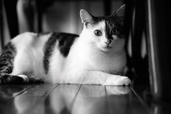275-365 (Garen M.) Tags: buttercup ella nikkor2470f28s nikonz6 cats dogs home